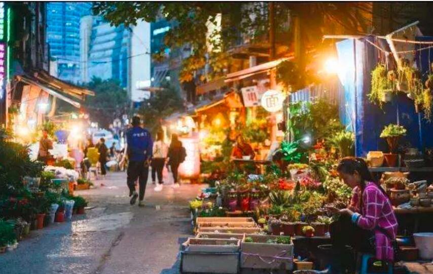 成为重庆当地人:探索当地花鸟市场。