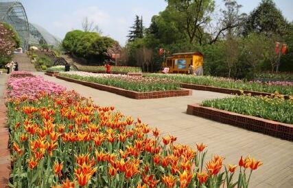 重庆南山植物园园区景点你都知道吗