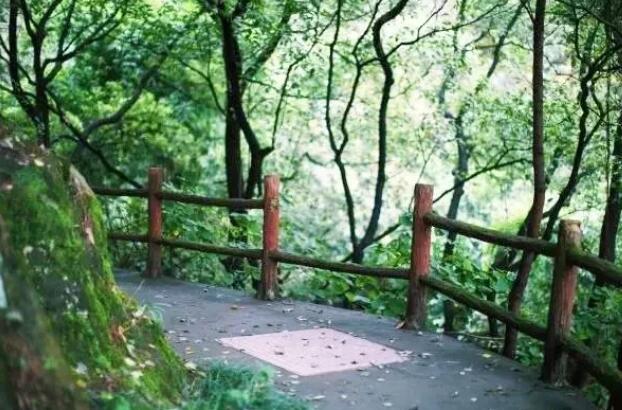 重庆南山有什么好玩的?重庆南山观光指南来了!